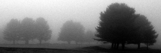 Trees in Fog I-Mary Woodman-Photographic Print