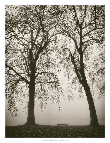 Trees in Fog II-Jody Stuart-Art Print