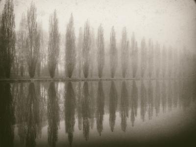 Trees in Fog V-Jody Stuart-Photographic Print