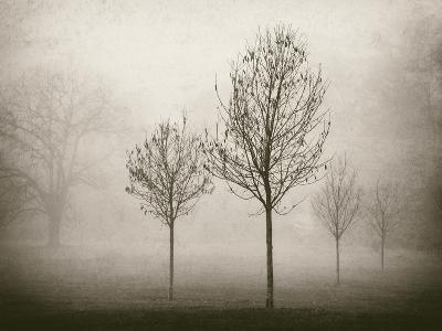 Trees in Fog VII-Jody Stuart-Photographic Print