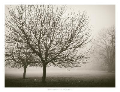 Trees in Fog VIII-Jody Stuart-Art Print