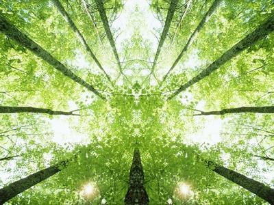 https://imgc.artprintimages.com/img/print/trees-in-forest-ascending_u-l-pzlwhd0.jpg?p=0