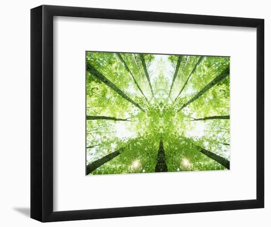 Trees in Forest Ascending-Robert Llewellyn-Framed Photographic Print