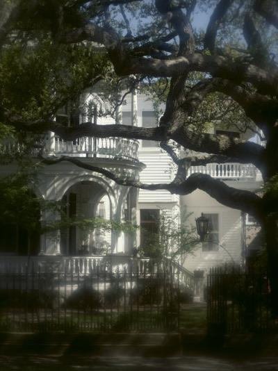 Trees in Front of a Mansion--Photographic Print