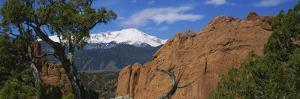 Trees in Front of a Rock Formation, Pikes Peak, Garden of the Gods, Colorado Springs, Colorado, USA