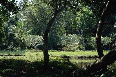 Trees in Garden at Lunuganga Garden, Dedduwa Lake, Bentota, Sri Lanka-Richard Bryant-Photographic Print