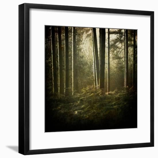 Trees in Mist at Dawn-David Baker-Framed Photographic Print