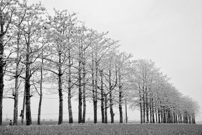 Trees in Row-michaeliao27-Photographic Print