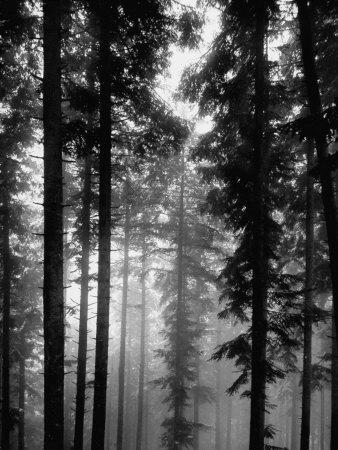 https://imgc.artprintimages.com/img/print/trees-in-the-black-forest_u-l-p697v00.jpg?p=0