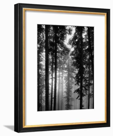 Trees in the Black Forest-Dmitri Kessel-Framed Premium Photographic Print