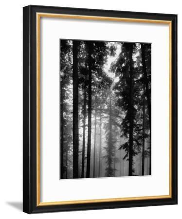 Trees in the Black Forest-Dmitri Kessel-Framed Premium Photographic Print
