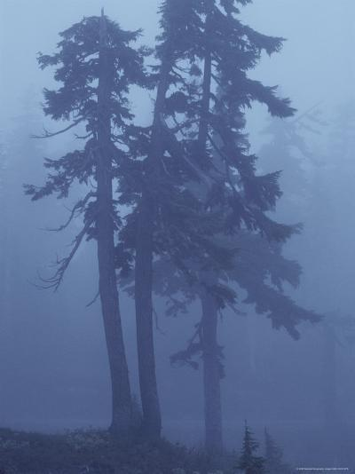 Trees in the Fog-David Boyer-Photographic Print