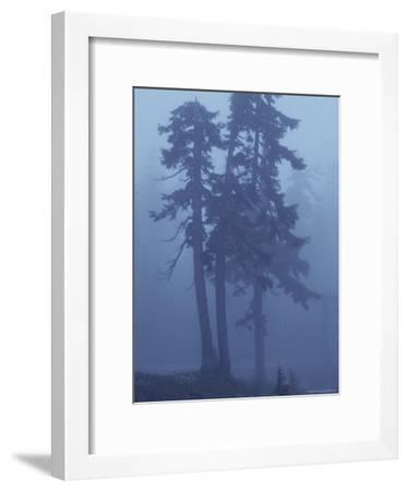 Trees in the Fog-David Boyer-Framed Photographic Print