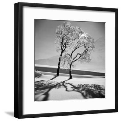 Trees in the Snow-Alfred Eisenstaedt-Framed Premium Photographic Print