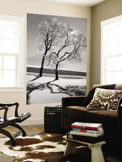 Trees in the Snow-Alfred Eisenstaedt-Wall Mural