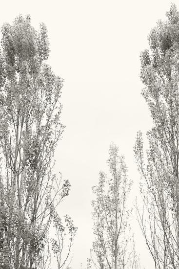 Trees IV-Karyn Millet-Photographic Print
