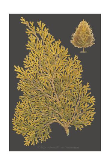 Trees & Leaves III-Vision Studio-Art Print