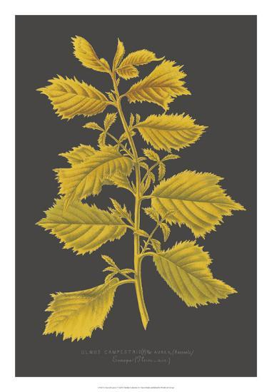 Trees & Leaves V-Vision Studio-Giclee Print