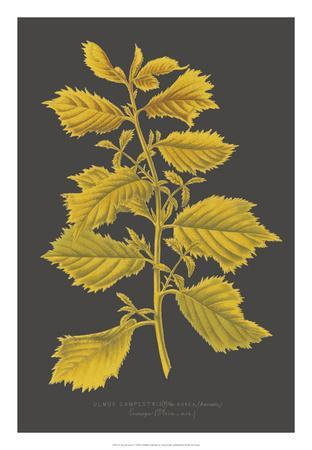 https://imgc.artprintimages.com/img/print/trees-leaves-v_u-l-f8hs630.jpg?p=0