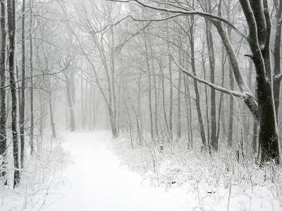 Trees Line a Snow-Covered Road Through a Forest-Amy & Al White & Petteway-Photographic Print