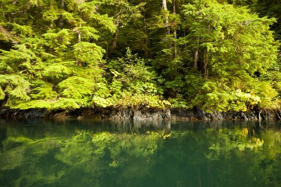 Trees of the Temperate Rainforest in a Bay Near Hecate Strait Reflected in Aqua Colored Water-Jonathan Kingston-Photographic Print