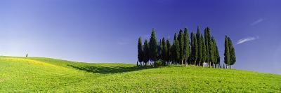 Trees on a Landscape, Val D'Orcia, Siena Province, Tuscany, Italy--Photographic Print