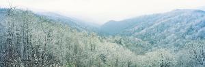 Trees on Mountain, Newfound Gap, Great Smoky Mountains National Park, North Carolina, USA
