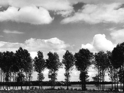 Trees on the Bank of a River-Dusan Stanimirovitch-Photographic Print
