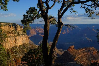 Trees on the Edge of the South Rim of the Grand Canyon-Paul Damien-Photographic Print
