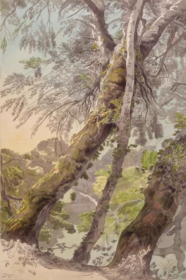 Trees Overhanging Water, 1800-Francis Towne-Giclee Print
