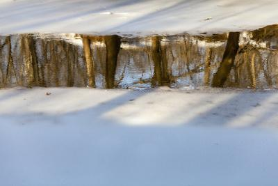 https://imgc.artprintimages.com/img/print/trees-reflected-in-the-water-on-manassas-national-battlefield-park-s-stone-bridge-loop-trail_u-l-pw58fz0.jpg?p=0