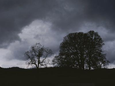 Trees Stand in Silhouette on a Dark Cloudy Day-Bates Littlehales-Photographic Print