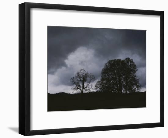 Trees Stand in Silhouette on a Dark Cloudy Day-Bates Littlehales-Framed Photographic Print