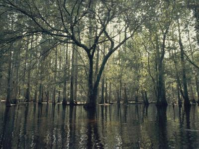 Trees Stick out of the Water-Bill Curtsinger-Photographic Print