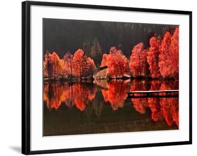 Trees Vs Trees-Philippe Sainte-Laudy-Framed Photographic Print