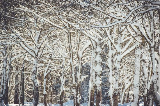 Trees, winter-Jule Leibnitz-Photographic Print