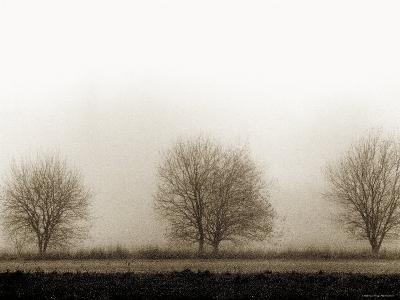 Trees-Monika Brand-Photographic Print