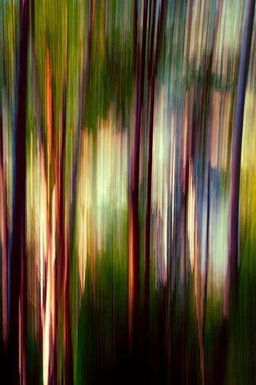 Trees-Ursula Abresch-Photographic Print