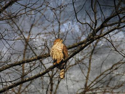 https://imgc.artprintimages.com/img/print/treetop-raptor_u-l-pu0o360.jpg?p=0