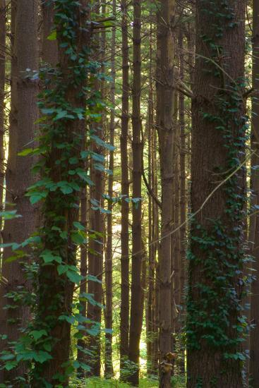 Treetrunks in Cataract Falls State Park forest, Indiana, USA-Anna Miller-Photographic Print