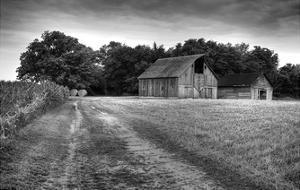 Down the Dirt Lane by Trent Foltz