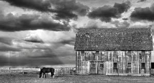 Horse and Barn by Trent Foltz
