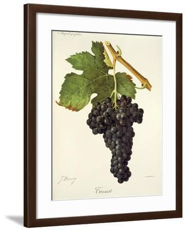 Tressot Grape-J. Troncy-Framed Giclee Print