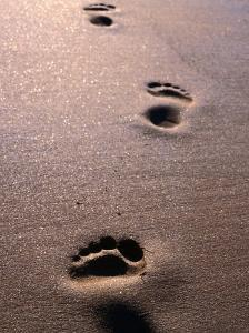 Footprints in the Sand of Eco Beach, South of Broome, Broome, Australia by Trevor Creighton