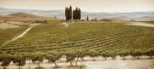 Tree Circle, Tuscany by Trevor Neal