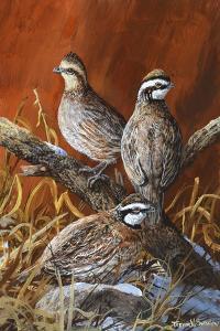 Bobwhite Trio 4 by Trevor V. Swanson