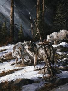 Forest Shadows by Trevor V. Swanson