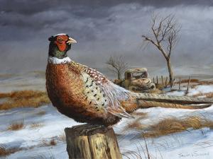 Old Perch by Trevor V. Swanson