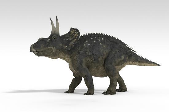 triceratops dinosaur white background art print by art com