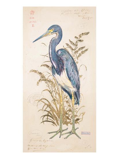 Tricolor Heron-Chad Barrett-Art Print